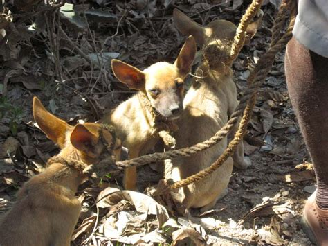What is Rabies?     Blogs   CDC