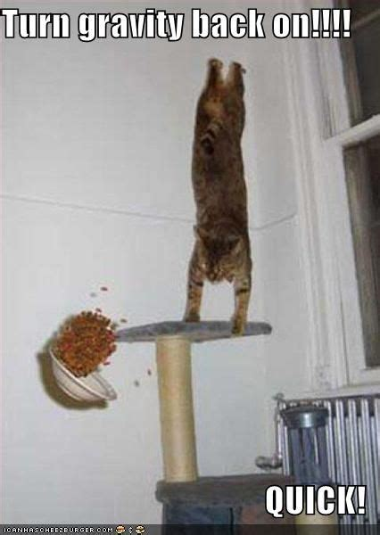 Gravity Cat   Know Your Meme