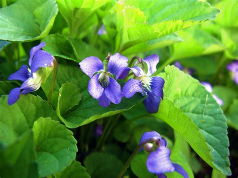Herbal Tea Garden - Herb Types to Grow   How To Build A House